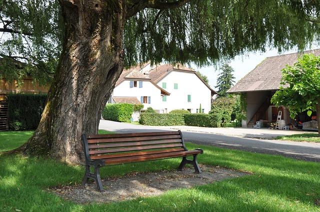 kursi taman di bawah pohon